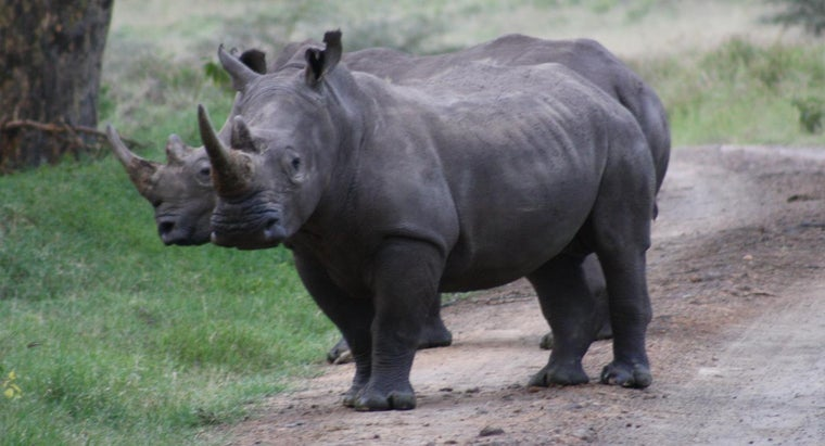 rhinos-eat