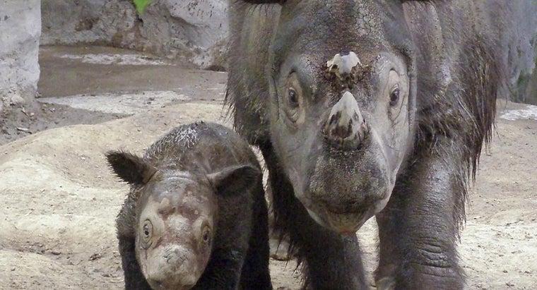 rhinos-endangered