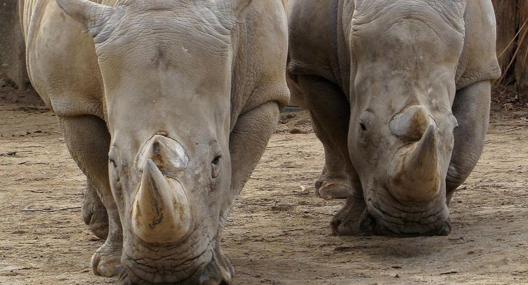 rhinos-live