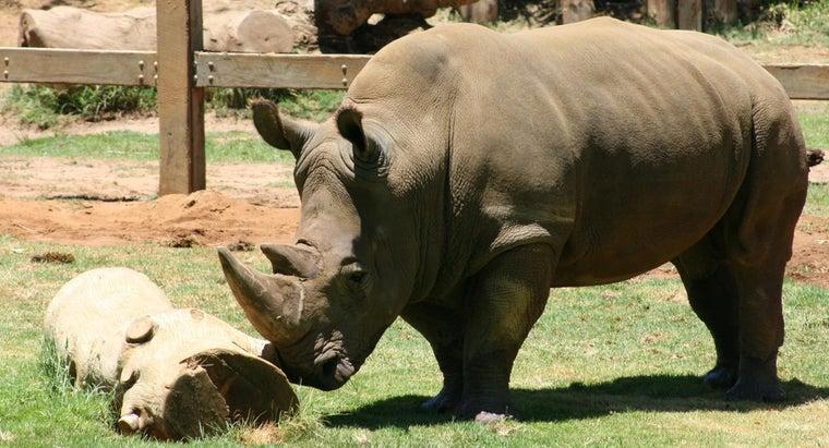 rhinos-thick-skin