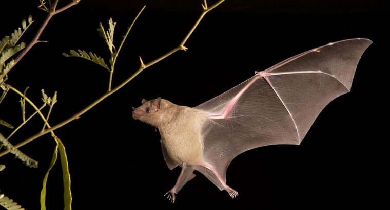 rid-bats