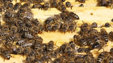 How Do I Get Rid of a Beehive?