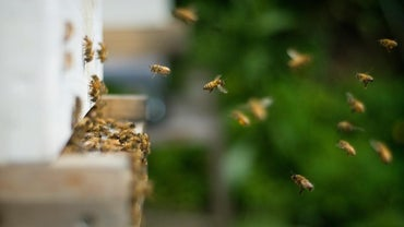 How Do You Get Rid of Bees That Are Nesting in the Ground?
