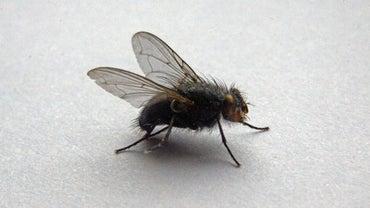 Does Vinegar Keep Flies Away? | Reference com