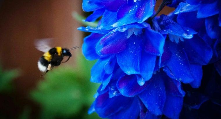rid-bumblebees-yard