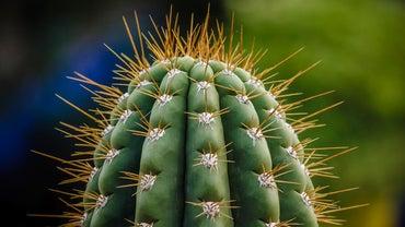 How Do You Get Rid of a Cactus?
