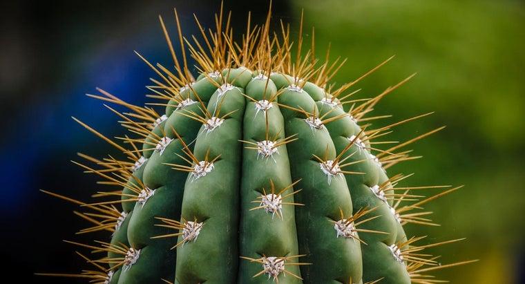 rid-cactus