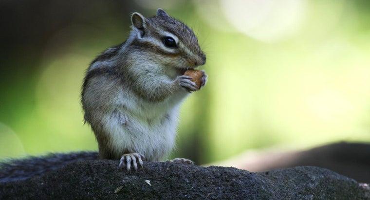 rid-chipmunks