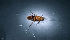 How Do You Get Rid of Cockroaches?