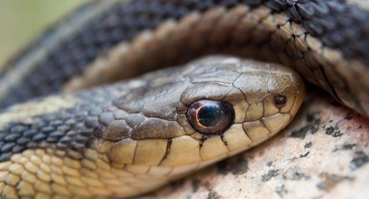 rid-garter-snakes