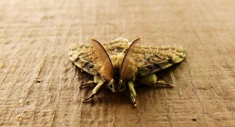 rid-gypsy-moths