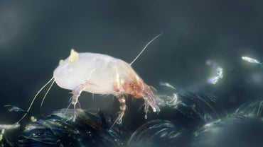 How Do You Get Rid of Mites on Humans?