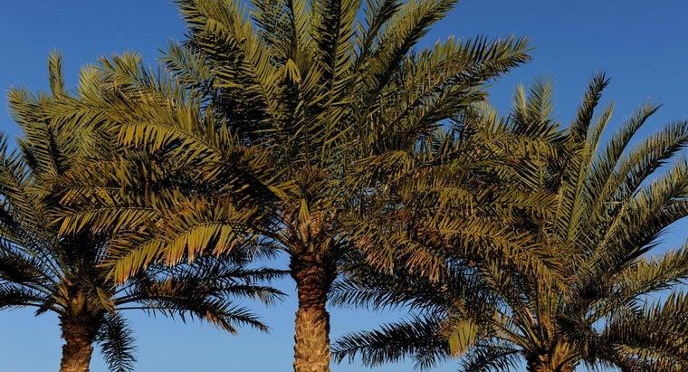 rid-palm-trees