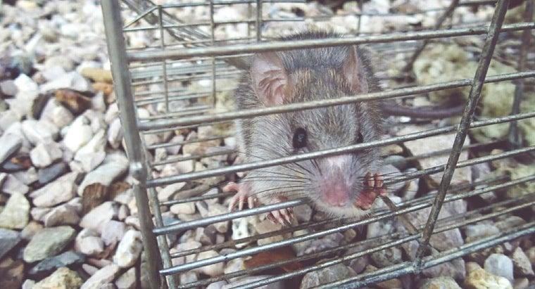 rid-rats-mice-poison