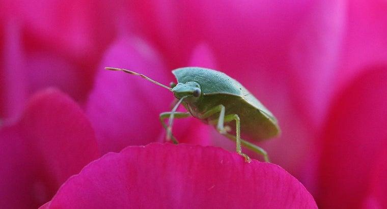 rid-stink-bugs