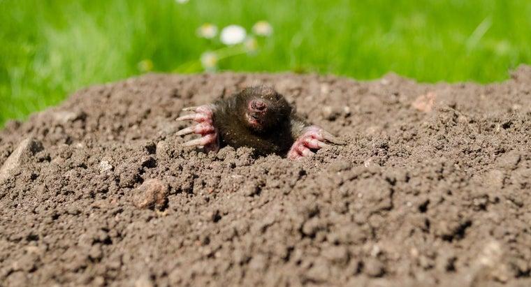 rid-yard-moles