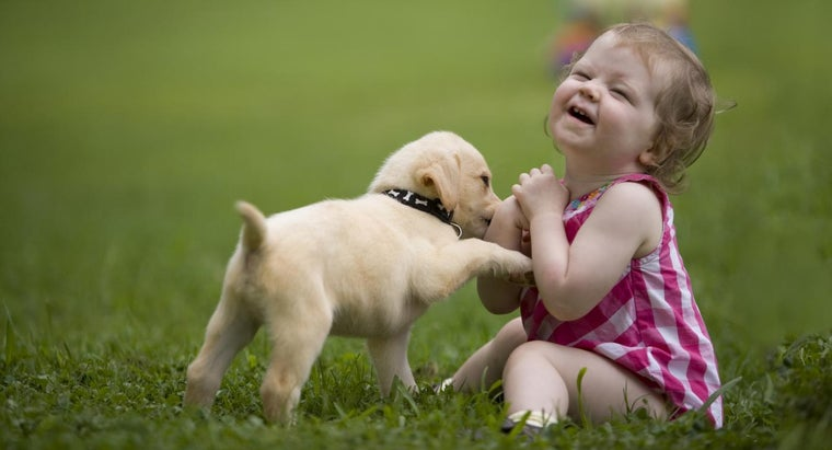 right-age-give-puppy-its-first-flea-prevention-treatment