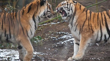 What Is the Role of Competition Among Animals?