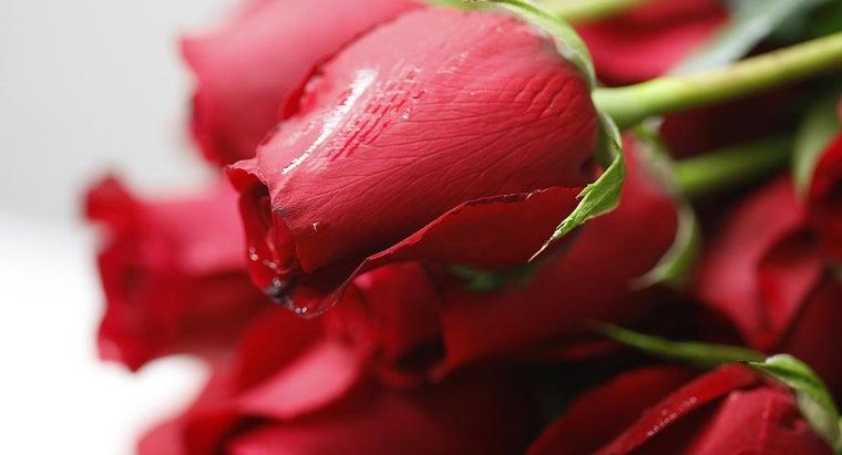 roses-bloom