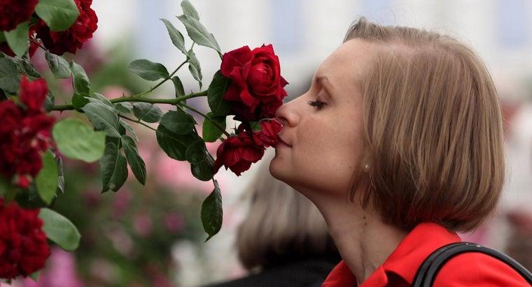 roses-grow