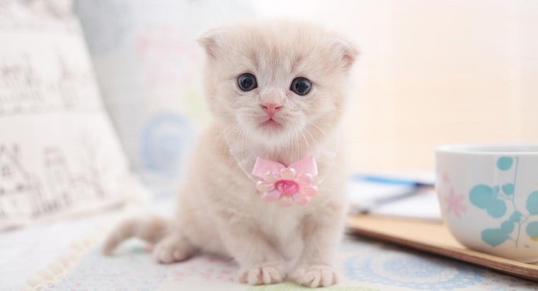s-way-buy-scottish-fold-kittens