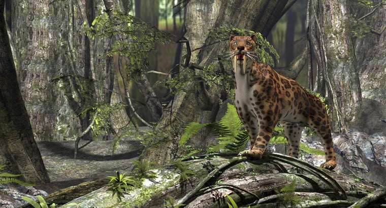 sabertooth-tiger