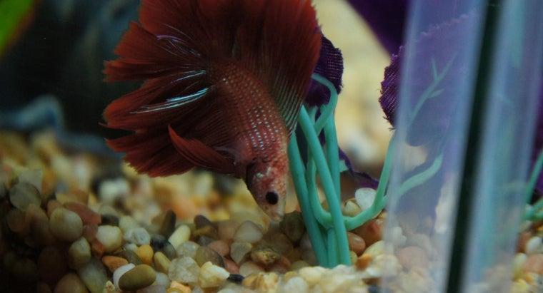 safe-plant-betta-fish-tank