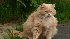 What Scents to Cats Dislike?