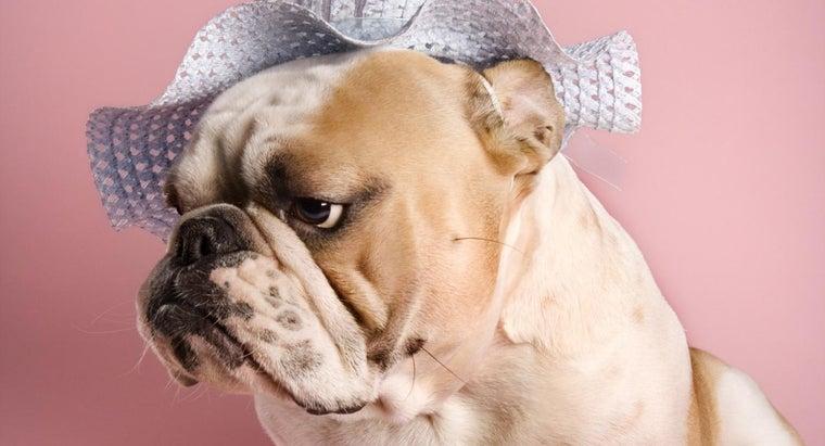 scents-dogs-dislike