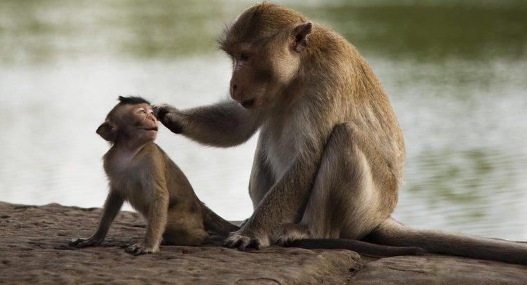 scientific-classification-monkey