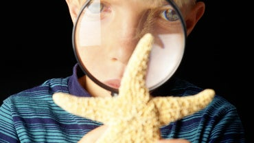 What Is the Scientific Classification of Starfish?