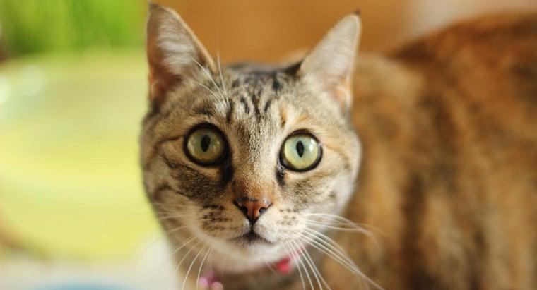 scientific-name-cat
