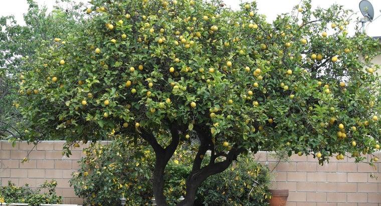 scientific-name-lemon