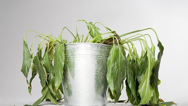 How Is It Scientifically Possible to Bring a Dead Plant Back to Life?