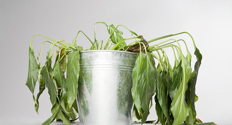 scientifically-possible-bring-dead-plant-back-life