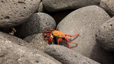 What Do Sea Crabs Eat?
