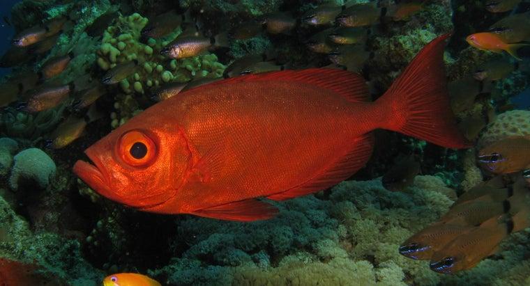 sea-fish-eat