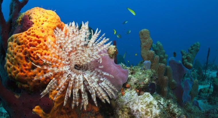 sea-sponges-eat