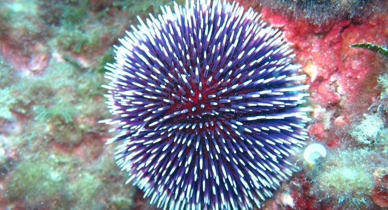 sea-urchins-move