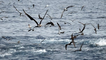 What Do Seabirds Eat?