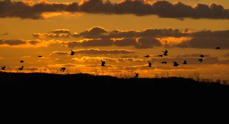 seagulls-night