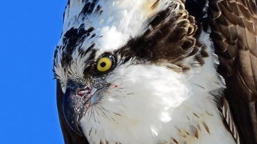 Is a Seahawk a Real Bird?