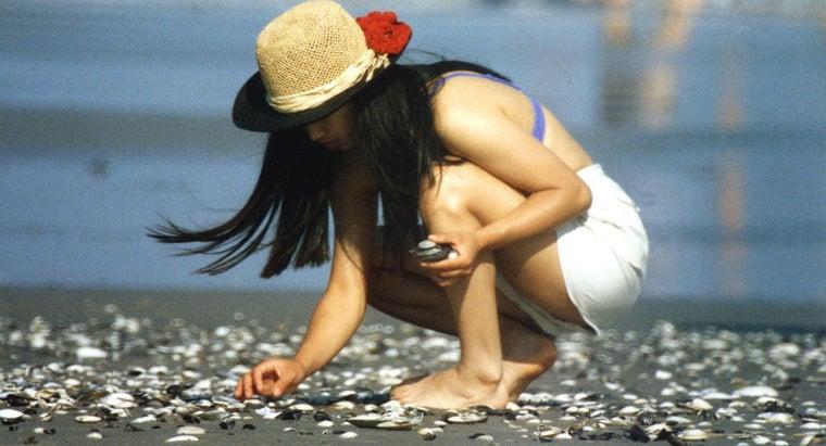 seashells-come
