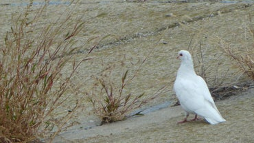 What Does Seeing a White Dove Mean?