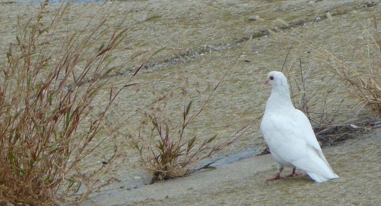 seeing-white-dove-mean