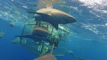 Is a Shark a Mammal?