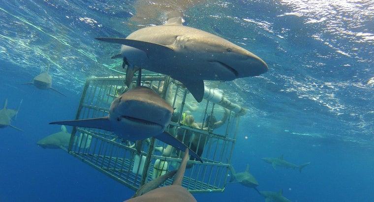 shark-mammal