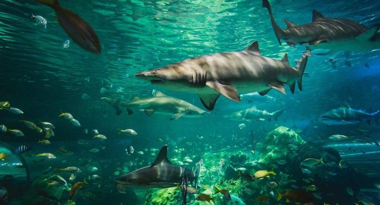sharks-adapt-environment
