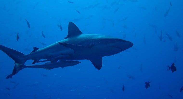 sharks-important