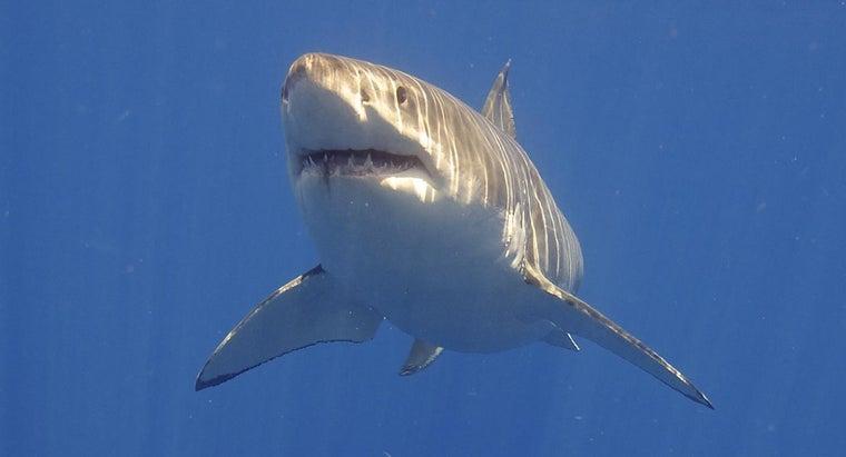 sharks-live